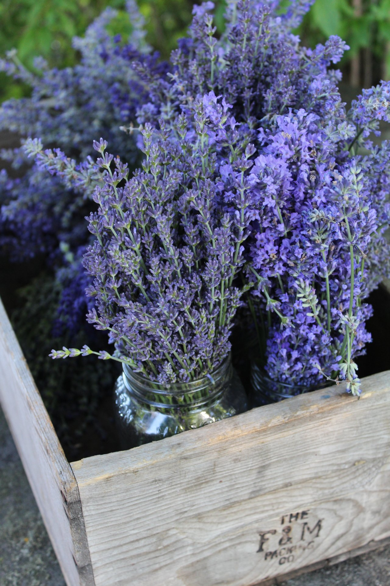 Lavender in A Box